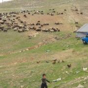 کوچ-عشایر