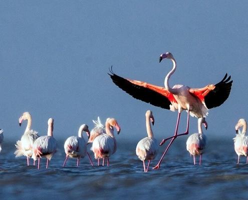 پرندگان-مهاجر